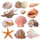 Coleção do Seashell fotografia de stock