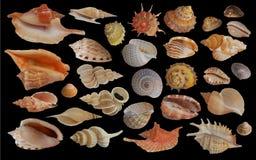 Coleção do Seashell foto de stock royalty free