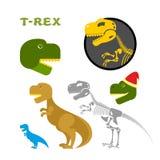 Coleção do tiranossauro dos artigos Ossos e o esqueleto Imagens de Stock Royalty Free