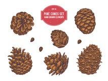 Coleção do vetor de cones tirados mão do pinho ilustração royalty free