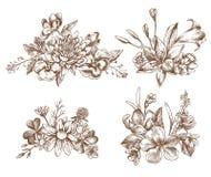 Coleção do vetor de flores tiradas mão do outono ilustração do vetor