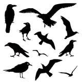 Coleção do vetor de silhuetas do pássaro Fotografia de Stock Royalty Free