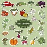 Coleção do vetor de vegetais dos ícones ilustração stock