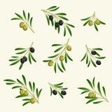 Coleção do vetor do ramo de oliveira Fotos de Stock