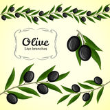Coleção do vetor do ramo de oliveira, azeitonas pretas Fotos de Stock Royalty Free