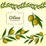 Coleção do vetor do ramo de oliveira, azeitonas verdes ilustração stock