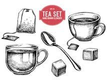 Coleção do vetor do material tirado mão do chá ilustração do vetor