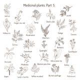 Coleção do vintage de ervas e de plantas médicas tiradas mão Imagem de Stock