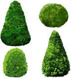 Coleção dos arbustos e do Cypress ilustração royalty free