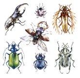 Coleção dos besouros da aquarela em um fundo branco Animal, insetos entomology wildlife Pode ser imprimido em t-shirt ilustração do vetor