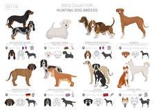 Coleção dos cães de caça isolada no branco Estilo liso Cor diferente e país de origem ilustração stock