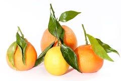 Coleção dos citrinos Imagem de Stock Royalty Free