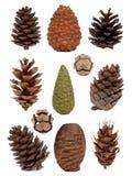 Coleção dos cones Imagem de Stock Royalty Free