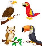 Coleção dos desenhos animados do pássaro Foto de Stock