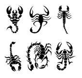 Coleção dos escorpião fotos de stock