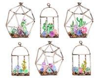 Coleção dos florariums com plantas carnudas e cuctuses da aquarela para dentro Imagem de Stock Royalty Free