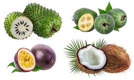 Coleção dos frutos exóticos isolados em um branco imagens de stock royalty free
