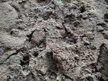 Coleção dos fundos - uma camada grossa de cimento na terra fotografia de stock royalty free