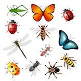Coleção dos insetos 2 Fotografia de Stock Royalty Free