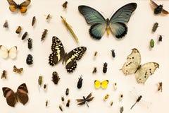 Coleção dos insetos Imagem de Stock