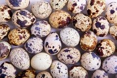 Coleção dos ovos de codorniz Fotos de Stock