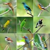 Coleção dos pássaros fotos de stock