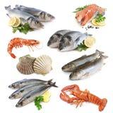 Coleção dos peixes fotos de stock royalty free