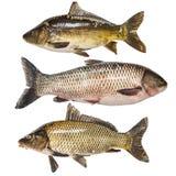 Coleção dos peixes Imagem de Stock Royalty Free