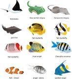 Coleção dos peixes ilustração stock