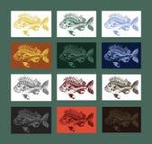 Coleção dos peixes da carpa colorida Imagem de Stock