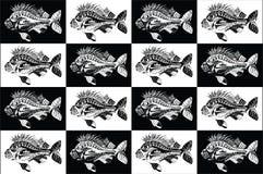 Coleção dos peixes da carpa preto e branco Imagem de Stock