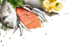 Coleção dos peixes frescos Imagem de Stock