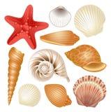 Coleção dos Seashells Fotografia de Stock Royalty Free