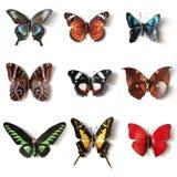 Coleção enchida da borboleta dos insetos Imagem de Stock Royalty Free