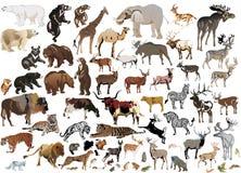 Coleção enorme de animais da cor Foto de Stock Royalty Free