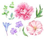 Coleção floral com as flores cor-de-rosa e azuis Foto de Stock