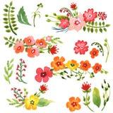 Coleção floral da aquarela Fotos de Stock