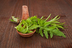 Coleção fresca das ervas Foto de Stock