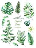 Coleção frondosa tropical Elementos florais da aquarela Handpainted Folhas da aquarela, ramos ilustração do vetor