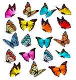 Coleção grande de borboletas coloridas Fotografia de Stock Royalty Free