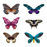 Coleção grande de borboletas coloridas Borboletas isoladas no branco Ilustração Fotografia de Stock Royalty Free