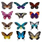 Coleção grande de borboletas coloridas Borboletas isoladas no branco Ilustração do vetor Imagens de Stock Royalty Free