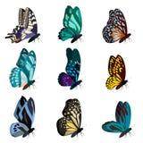 Coleção grande de borboletas coloridas Borboletas isoladas no branco Vetor Foto de Stock Royalty Free
