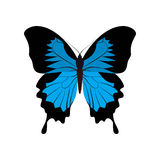Coleção grande de borboletas coloridas Borboletas isoladas no branco Vetor Fotos de Stock Royalty Free