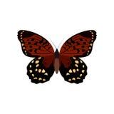 Coleção grande de borboletas coloridas Borboletas isoladas no branco Vetor Imagens de Stock