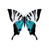 Coleção grande de borboletas coloridas Borboletas isoladas no branco Vetor Imagem de Stock