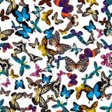 Coleção grande de borboletas coloridas Borboletas no branco Ilustração do vetor Foto de Stock Royalty Free