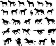 Cavalos ilustração do vetor