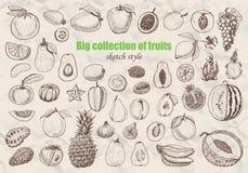 Coleção grande dos frutos no estilo do esboço Foto de Stock Royalty Free