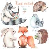 Coleção, grupo de ilustrações bonitos dos animais da floresta da aquarela ilustração stock